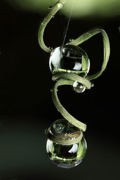 raindrops on passion flower tendril; photo by .Brian Valentine