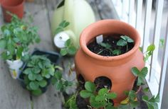 Balcony Garden Tips on plant containers. #gardening