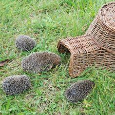 Best for Birds Hedgehog House, Hedgehog Pet, Willow Weaving, Basket Weaving, Willow Garden, Bug Hotel, Garden Bugs, Meditation Garden, Basket Crafts