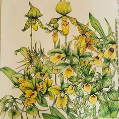"Colouring book ""The garden of earthly delights""  #컬러링북#색칠공부#꽃#꽃스타그램 #취미스타그램#색연필#프리즈마 #coloringbook#colouringbook#beautifulcoloring#livrocoloriramo#colouredpencils #thegardenofearthlydelights"
