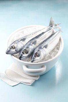 Elisa Andreini's 'Eating Animals' on Your Kitchen Camera