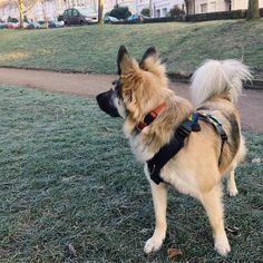 Nothing like the crunch of the earth underpaw #declandog  #frostypaws #brightondogs #welovebrighton #sundaymorning . . . #gsdlove #muttsofinstagram #adoptdontshop #dogsofinstagram  #germanshepherdsofintagram #endbsl #pawpack #bestwoof #thestatelyhound #houndsbazaar #ilovedogs #rescuedogs #foundmyanimals #dogsandpals #fluffypack #excellent_dogs #dogcrushdaily