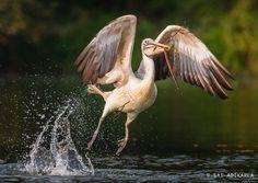 Photo Flight to Nest by Sai Adikarla on 500px