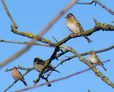 Winter Birds | Birds Wintering by Pyrford (C) Colin Smith :: Geograph Britain and ...