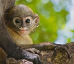 10 Animals the President's Trade Deal Will Help Protect from ...