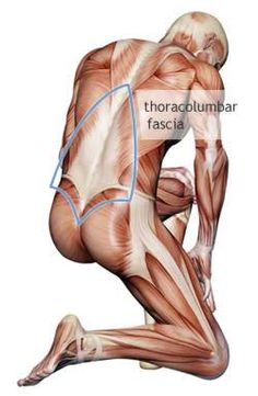 https://www.painscience.com/articles/does-fascia-matter.php