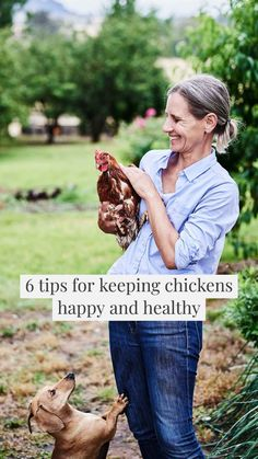 Backyard Chickens 6 tips for keeping chickens happy and healthy. Low Maintenance Pets, Low Maintenance Garden Design, Low Maintenance Landscaping, Small Front Yard Landscaping, Landscaping Company, Lawn Mowing Business, Lawn Care Business, Growing Lavender, Health