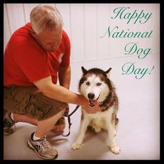 "Seamus the Siberian Husky says, ""Happy National Dog Day!"""