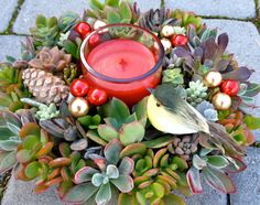 Succulent Wreath for a Holiday Centerpiece or by WoogiesPlace, $49.99