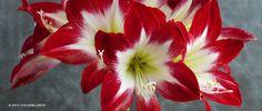 10 id es de plantes pour fleurir votre jardin d co for Entretien jardin queven