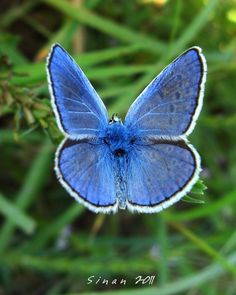 These blue beauties are everywhere in Costa Rica