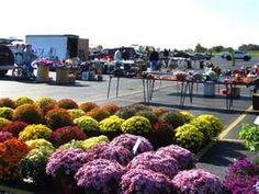 Caesars Creek Flea Market in clinton county Ohio