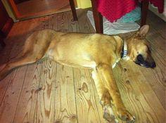 Eko.Tamara / poludňajšia siesta