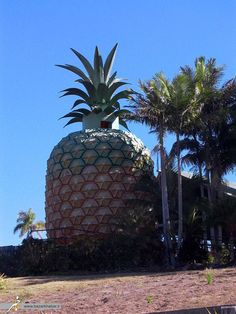 Unusual Pineapple Building | #Information #Informative #Photography