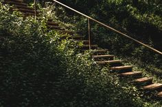 Trauma Recovery & Resilience Class: May 11 - 2020 Health Class, Hemp Oil, Trauma, Recovery, Vines, Survival, Stairs, Healing, Stock Photos