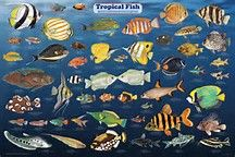 80 Best Fishes Are Awesome For Tanks Images Bing Images Image