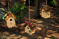 DIY Edible Birdhouses!
