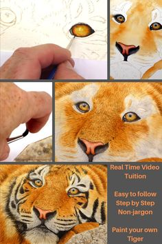 Wildlife artist & online art tutor who specialises in realistic, fine art watercolour paintings & teaching others how to paint. Painting Fur, Acrylic Painting Tips, Painting Videos, Watercolor Tiger, Watercolor Animals, Watercolor Paintings, Cat Eyes Drawing, Tiger Sketch, Hawk Tattoo