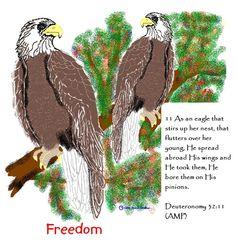 Deut. 32:11 Eagles; pencil ink