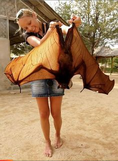 Flying fox (bat) from Belize // photo by Mai Live Wiyah Love
