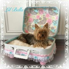 Shabby Chic Doggie Bed Made From A Vintage Suitcase. Bella The Cute Little  Yorkie.