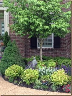 Small front yard foundation planting - evergreen shrubs, ornamental tree and perennials