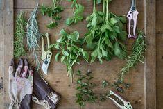 I veckans inlägg om hur du konserverar kryddor har vi sammanställt tips på hur du bäst tar vara på smaken i dessa fantastiska växter inför vintermånaderna.