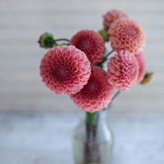 Bracken Rose Dahlia via Floret Flower Farm Types Of Flowers, Cut Flowers, Vase Transparent, Bulbs And Seeds, Vases, Flower Farm, Garden Inspiration, Color Inspiration, Flower Power