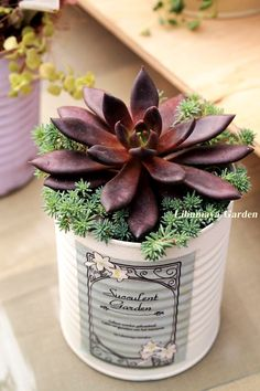 succulent arrangement with cold hardy sempervivum and sedum Succulents Growing Succulents, Succulents In Containers, Cacti And Succulents, Planting Succulents, Cactus Plants, Sempervivum, Cactus Decor, Succulent Arrangements, Cactus Y Suculentas