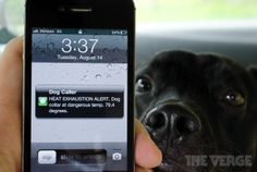 Dog Collar monitoring via phone - perfect for a black doggie running around in AZ summers