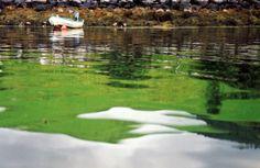Grüne Spiegelung im Wasser, Foto: S. Kretschmer