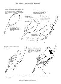 How to Draw Worksheets for The Young Artist: How to Draw A Cardinal Bird Worksheet Bird Drawings, Easy Drawings, Animal Drawings, Pencil Drawings, Drawing Birds, Drawing Lessons, Drawing Techniques, Art Lessons, Teaching Drawing