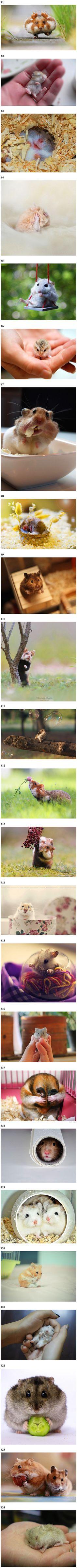 Hamster et souris