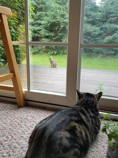 Formerly feral cat misses fast food by disasterkitty. What you think about?