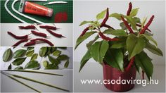 Acalypha hispidia (Szépcsalán) - My clay flower https://www.facebook.com/Csodavirag