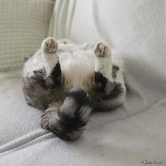 How cute kitty butt <3