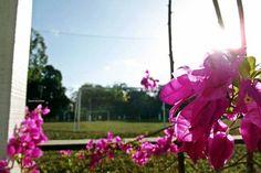 #flores #céuazul