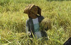 indonesia java island woman harvesting rice padi field agriculture farming food harvest farmers wife women horizontal