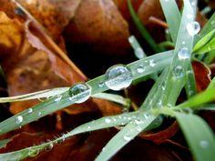 Gotas de otoño by Manel, via Flickr