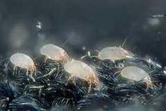 How to get rid of dust-mites! Yikes!!