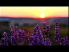 Meditation to Forgive Yourself, with Doreen Virtue - YouTube