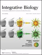 Toward personalized cancer nanomedicine – past, present, and future. Alexander H. Stegh. Integrative Biology, issue 1, 2013, inside front cover.