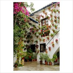 GAP Photos - Garden & Plant Picture Library - Traditional Spanish courtyard garden with Bougainvillea, Tropaeolum and Pelargoniums in terracotta pots hanging on whitewashed walls. The Cordoba Patio Festival, Andalucia, Spain. - GAP Photos - Specialising in horticultural photography