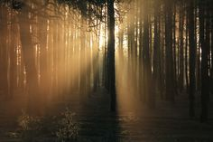 trees, dark, sunlight, plants, forest, sunrise | 5183x3455 Wallpaper - wallhaven.cc Sunset Photos, Hd Photos, I Coming Home, Background Pictures, My Happy Place, Sunlight, Free Images, Sunrise, Earth