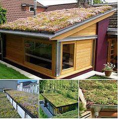 Les avantages d'un toit végétalisé