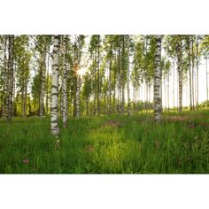 birch tree wall picture at Lowe's