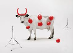 Cow Advertisements - Bing Images