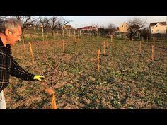 Tăierea pomilor fructiferi | Visinul | Tăierile de formare a coroanei | 4K - YouTube Youtube, Life, Youtubers, Youtube Movies