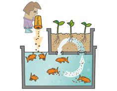 4 Easy Steps to Set-Up Your Own Backyard Aquaponics System - Tools And Tricks Club Aquaponics System, Aquaponics Greenhouse, Aquaponics Fish, Hydroponic Gardening, Homemade Hydroponics, Growing Plants, Growing Vegetables, Plant Growth, Water Plants