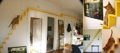 """""""O GRITO DO BICHO"""": Esse homem transformou a sua casa em um paraíso pa..."""